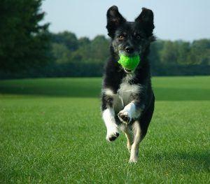 exuberant-dog
